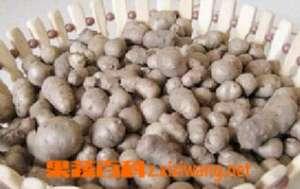山药豆的功效与禁忌